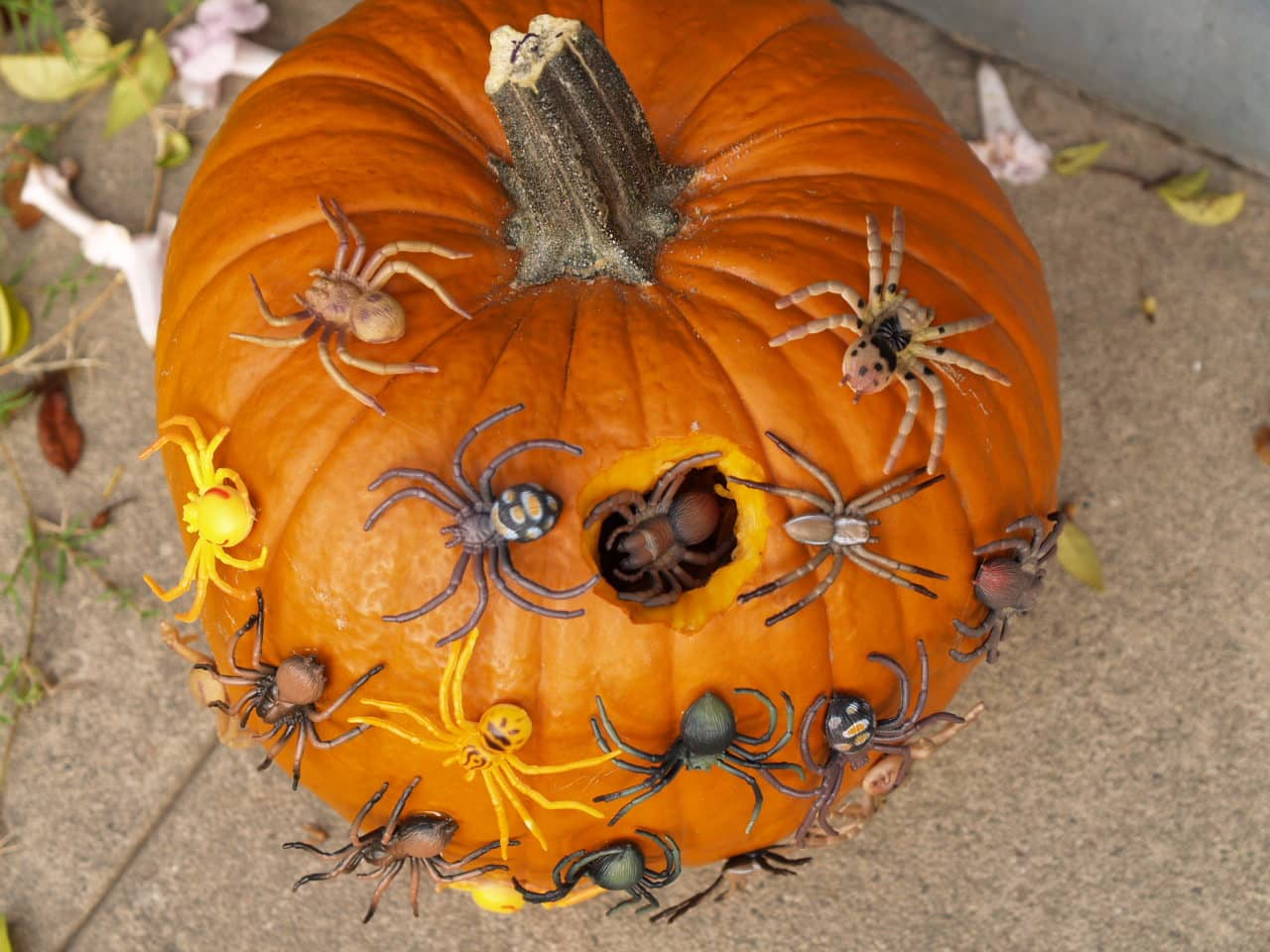 Halloween Pumpkin with Spiders